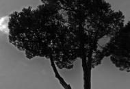 roma-28.jpg