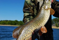 Fishing trips for pike - www.guidedfishing.eu - Fishing trips with guide