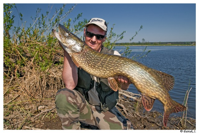 Fishing with guide - Pike - www.guidedfishing.eu - Fishing trips
