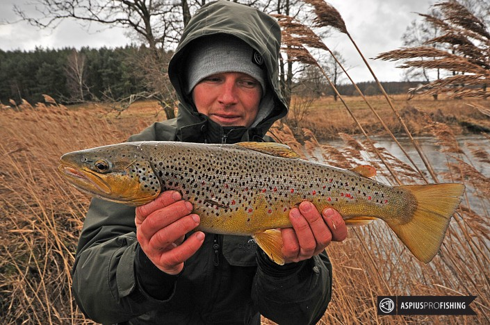 brown-trout-wwwguidedfishingeu-1