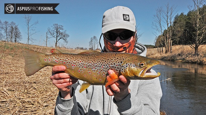 brown-trout-wwwguidedfishingeu-2
